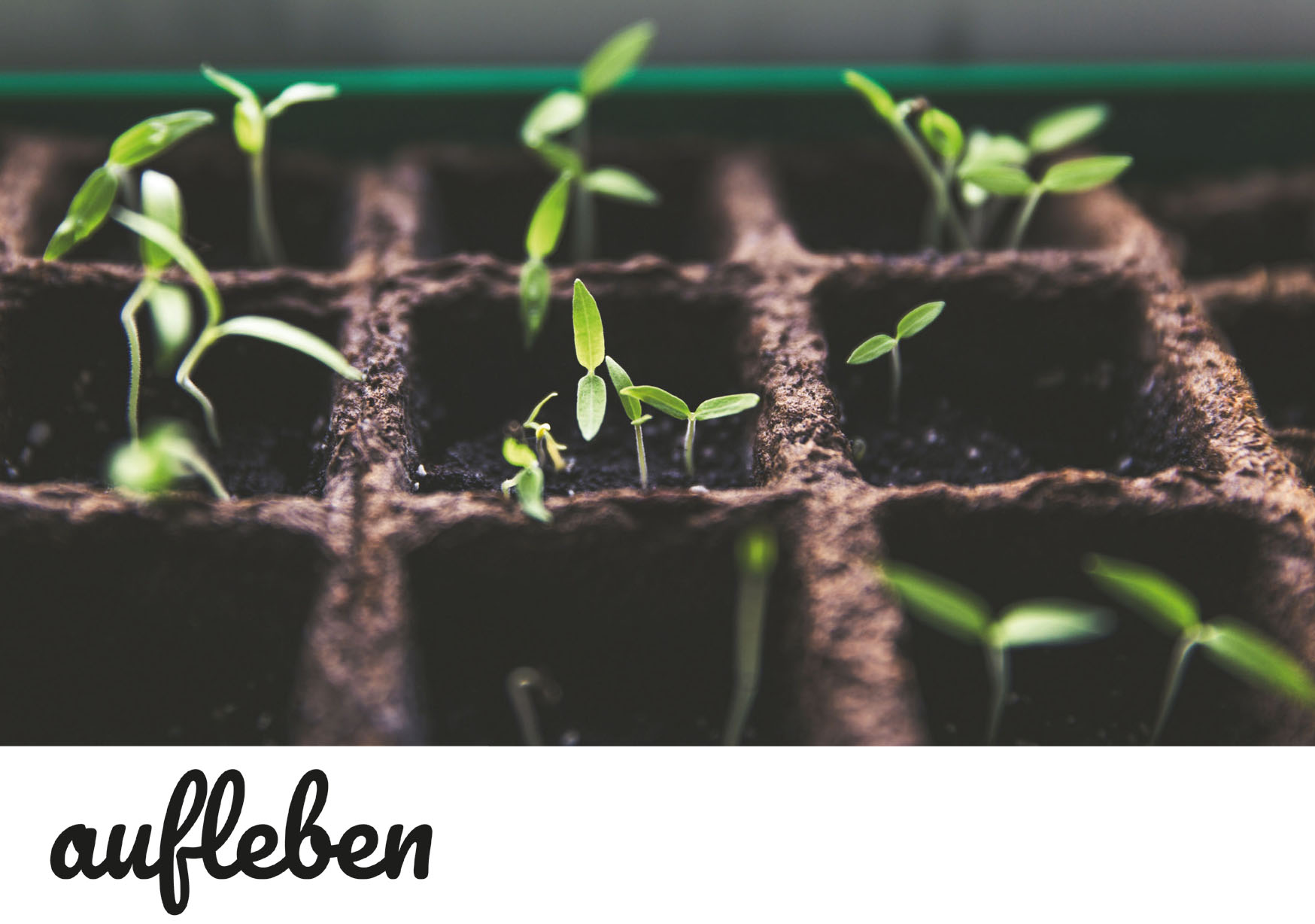 """Der neue Blog """"aufleben"""" erzählt humorvoll, frech, aber stets positiv und ermutigend von und für Menschen aus der Landwirtschaft."""